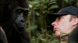 Download Human and Gorilla Reunite after 5 years 60 Minutes Australia June 3rd 2012 Video