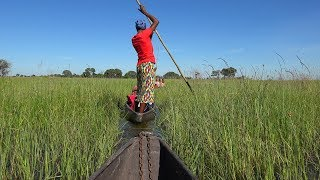 Download Botswana: Okavango Delta & Chobe River in 4K Ultra HD Video