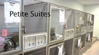 Download Bayside Pet Resort & Spa Virtual Tour Video