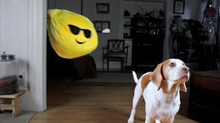 Download Dog Pranked with Giant Emoji: Cute Dog Maymo Video