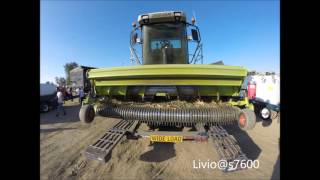 Download Danell Custom Harvesting 30's CLAAS JAGUAR Video