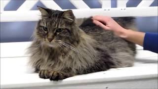 Download Adopt an Adult Cat - Larimer Humane Society Video