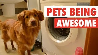 Download The Pet Collective & People Are Awesome present: Pets Are Awesome! Video