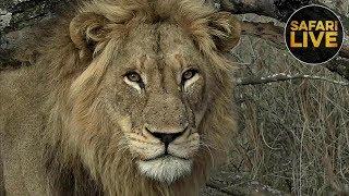 Download safariLIVE - Sunrise Safari - November 3, 2018 Video