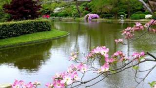 Download Tavaszi zsongás... Video
