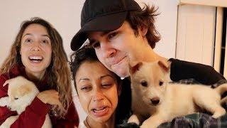 Download SURPRISING DAVID'S GIRLFRIEND LIZA KOSHY WITH MY GIRLFRIEND'S NEW PUPPY!! Video