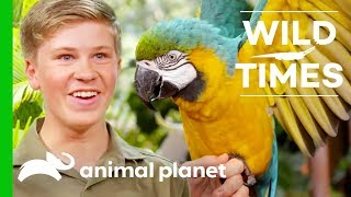 Download Meet The Majestic Blue And Gold Macaw   Wild Times Video