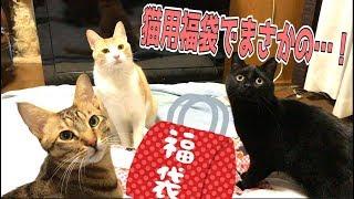 Download まさかの布団!?猫用福袋5000円分開封してみたら…! Video