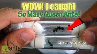 Download WOW! I CAUGHT SO MANY QUEEN ANTS! Video