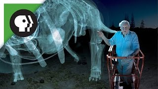 Download 360 degree video: Dinosaur Giant with David Attenborough! Video