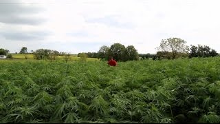 Download Why Kentucky farmers are quitting tobacco and turning to hemp Video