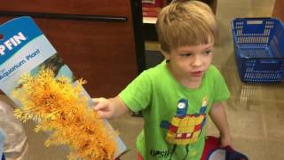 Download Buying a fish in Pet Smart, cat adoption center, Kids Adventures With Sweetie Fella Aleks Video