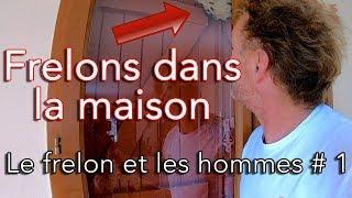 Download Frelons asiatique dans la maison - Le frelon et les hommes # 1 Video
