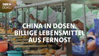 Download Billige Lebensmittel aus Fernost - China in Dosen | SWR Doku Video