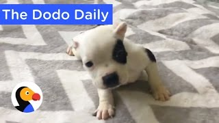 Download Best Animal Videos on YouTube Today | The Dodo Daily Ep. 12 Video