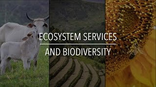 Download FAO Policy Series: Ecosystem Services and Biodiversity Video