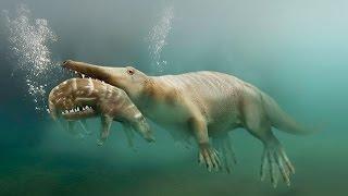Download Пути эволюции — Сухопутные киты (Документальные фильмы, передачи HD) Video