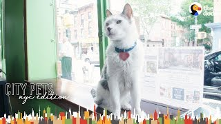 Download Cat Runs A Real Estate Office In Brooklyn | The Dodo City Pets Video