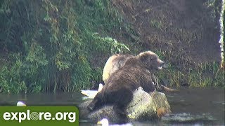 Download This Week At Brooks Falls 8.03.18: Cute Cubs! Video