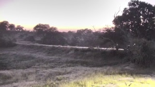 Download Djuma Private Game Reserve Live Stream Video