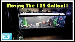 Download Setting up The First 125 Gallon Fish Tank on The Double Stand! Video