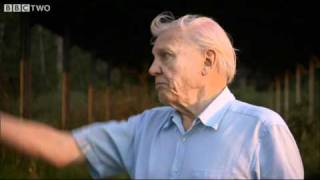 Download Deforestation in Madagascar - Attenborough and The Giant Egg, Preview - BBC Two Video
