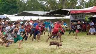 Download PIG CHASE // TULI PUAKA // TONGA AGRICULTURAL SHOW Video