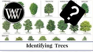 Download How to Identify a Tree By Leaf, Bark and Fruit | Wood and Lumber Identification for Woodworking Video