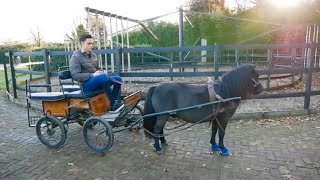 Download PONY TAKES OFF WITH CARRIAGE Video