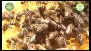 Download Apiculture GKVK Video