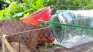 Download Quick Mongoose Using Big Plastic Bottle Trap | Unbelievable Catching Two Mongoose Randomly Video