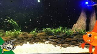Download 800 GALLON AQUARIUM FEEDING. New Fish! Video