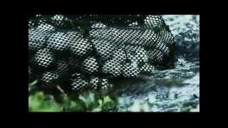 Download ESPN White Gold, Golf Ball Diving Video