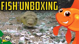 Download Aquarium Fish Unboxing. Rare Plecos, Puffer Fish, Corydoras, Cardinal Tetras, Rice Fish Video