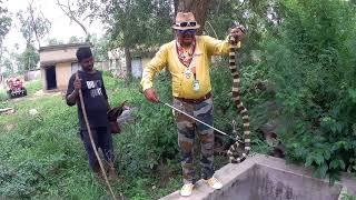 Download    Rescue by Banded Krait venomous snake mobarak snake saver Panchet dam Dhanbad Jharkhand    Video