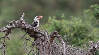 Download Young Birders Event: Expedition Kenya - Sarah Video
