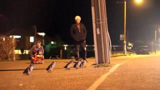 Download BLUE PENGUINS IN OAMARU Video
