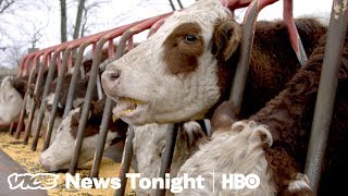 Download Trump's Feud With China Is Already Hurting American Farmers (HBO) Video