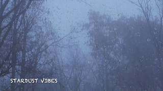 Download Rain & Thunder Sounds in the Foggy Forest | Thunderstorm Sounds for Sleep, Insomnia & Relaxing Video