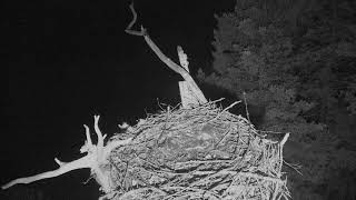 Download Audubon Osprey Nest Cam 08-15-2018 22:37:40 - 23:37:41 Video