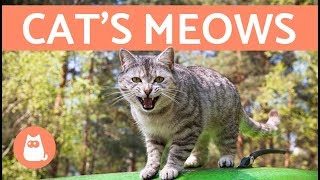 Download Cat's Meows and What They Mean Video