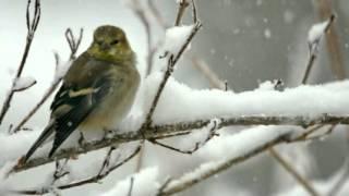 Download Gheorghe Zamfir - Birds of winter Video