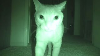Download What Cats Do At Night... Video