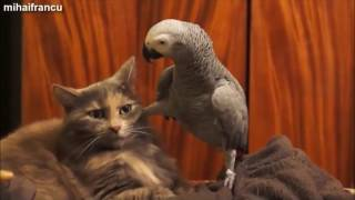 Download PERROQUET COMPILATION INSOLITE !!! Video