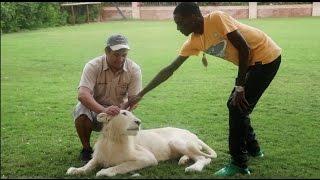 Download HUGE LION ATTACKS SOULJA BOY Video