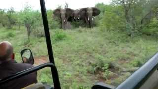Download Elephant Encounter - Guiding through a tricky situation! Video