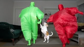 Download Dog Gets Surprise Dance Party w/Chub Suit Men (Nic Cage): Funny Dog Maymo Video