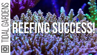 Download Reefing Success 3 Ways - Let's Compare Video