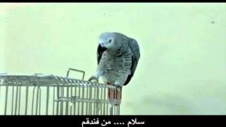 Download toti-Ali Bitarafan(kasko) FANDOGH i love u PMC.wmv Video