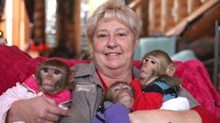 Download The Monkey Mum Video